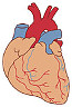 冠動脈M.jpg