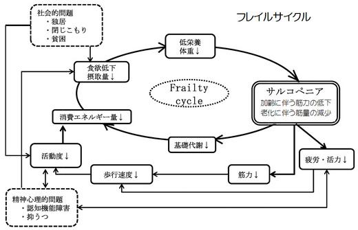 フレイルサイクル.jpg